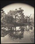 Forest of Fontainebleau, La Forêt de Fontainebleau